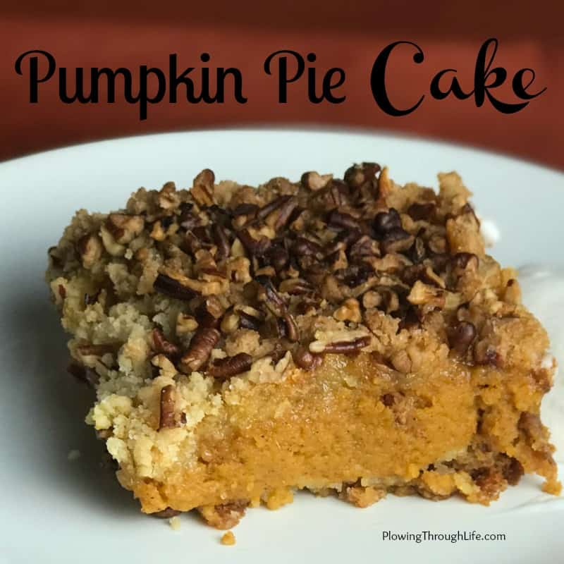 Piece of layered pumpkin pie cake from a box topped with pecans