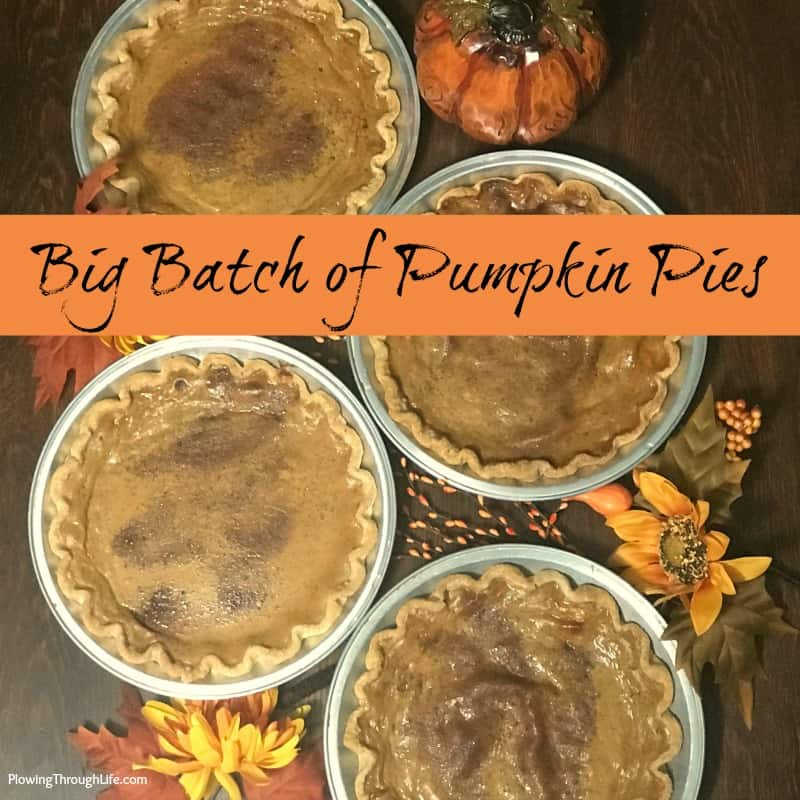 pumpkin pies for a big crowd - this recipe makes 4 pies