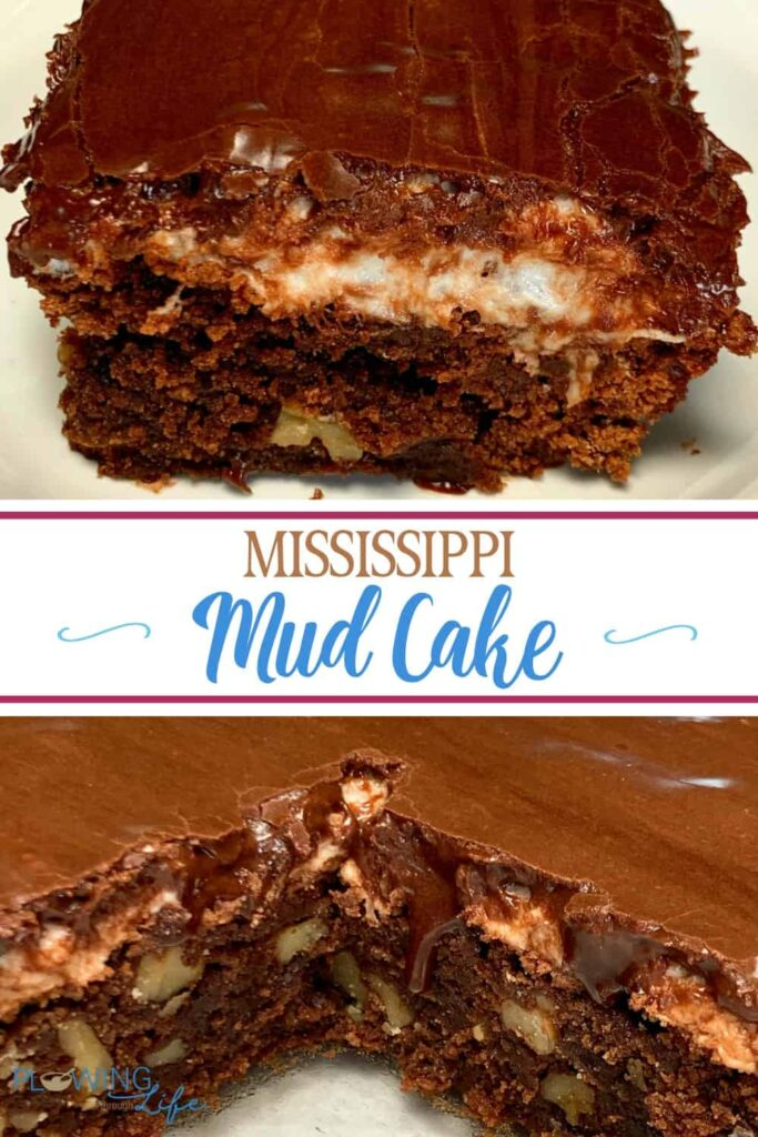 Easy homemade Mississippi Mud Cake